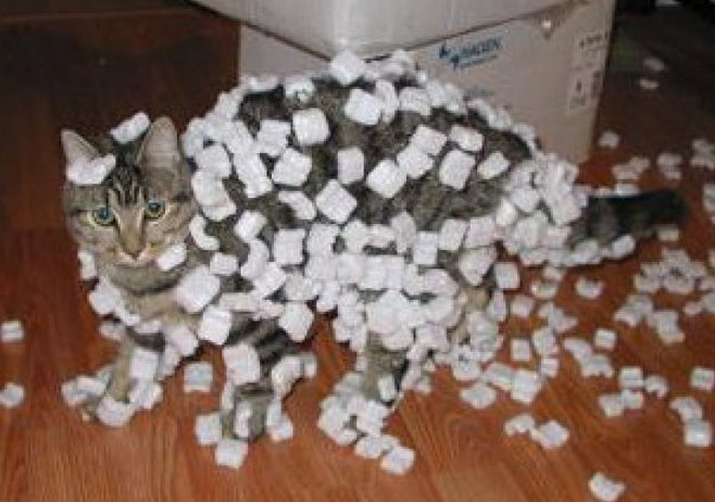 static-cat